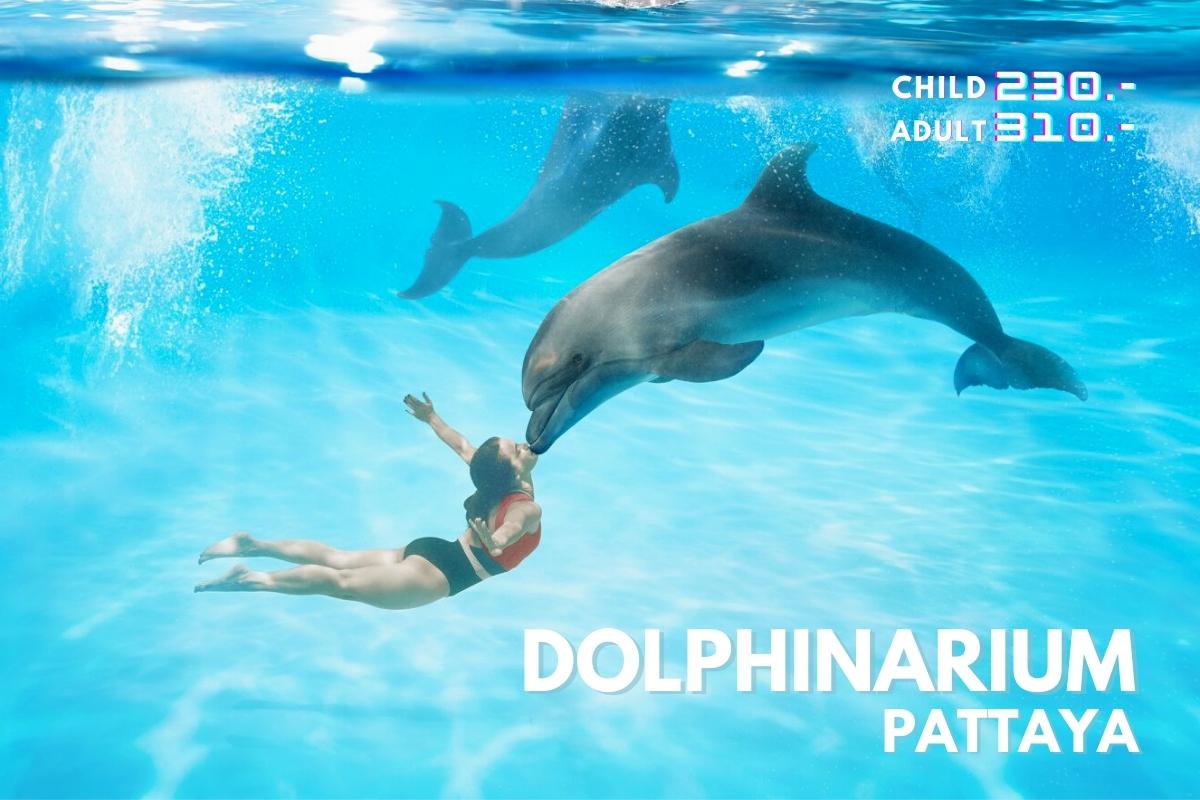 泰國國內旅遊【活動票券】Pattaya Dolphinarium 芭達雅海豚之家